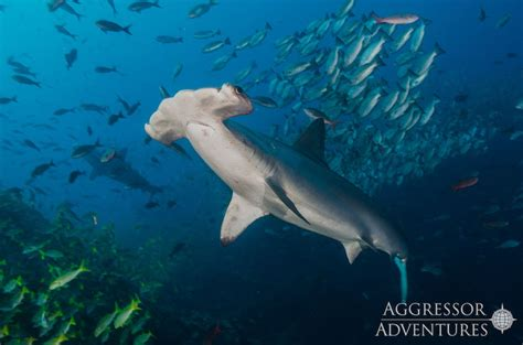 Join GTS in Cocos Island for the Liveaboard trip of a